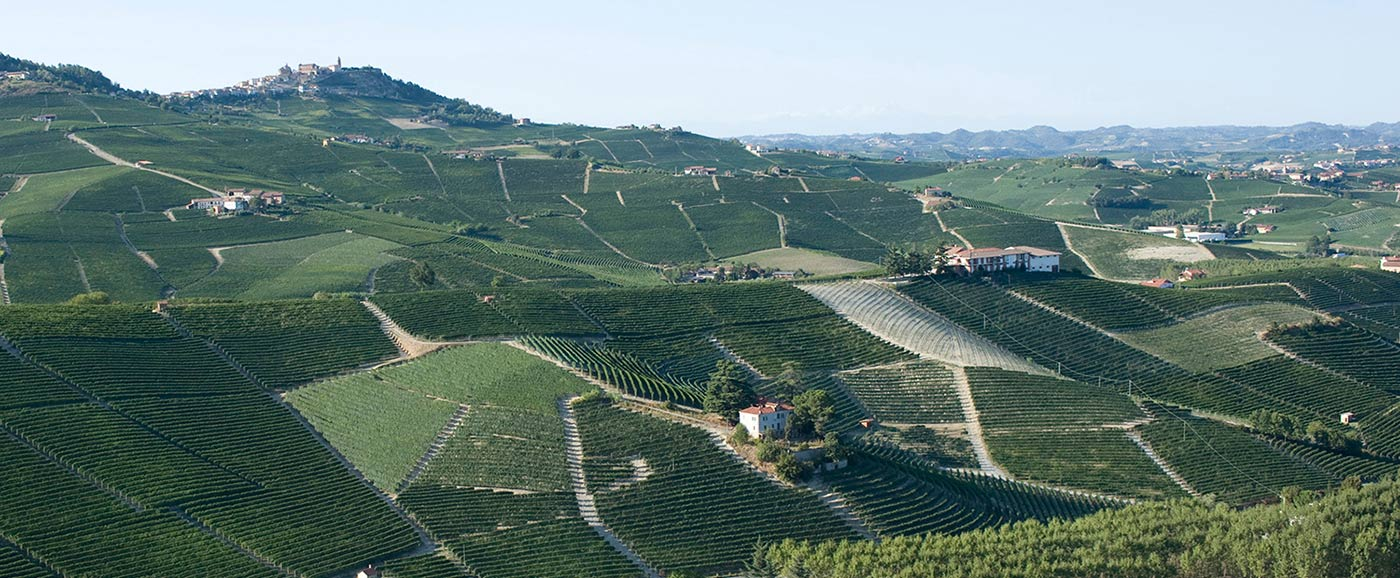 Cannubi Vineyards, Barolo