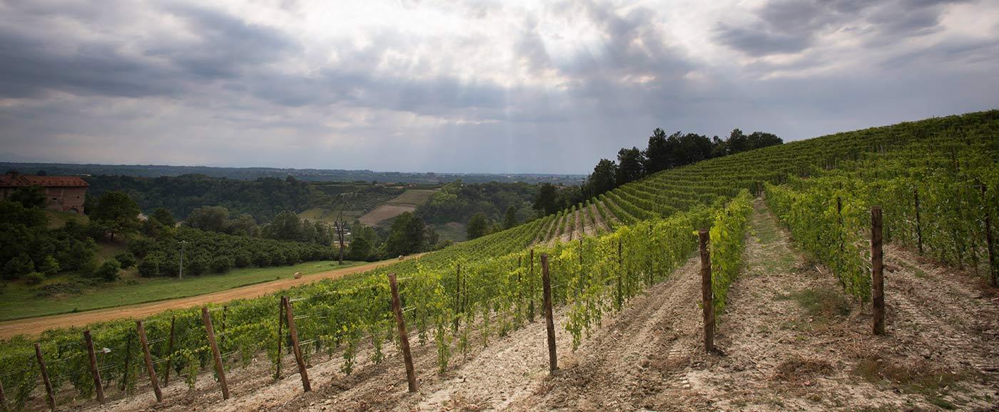 Bric Micca Vineyards, Neive