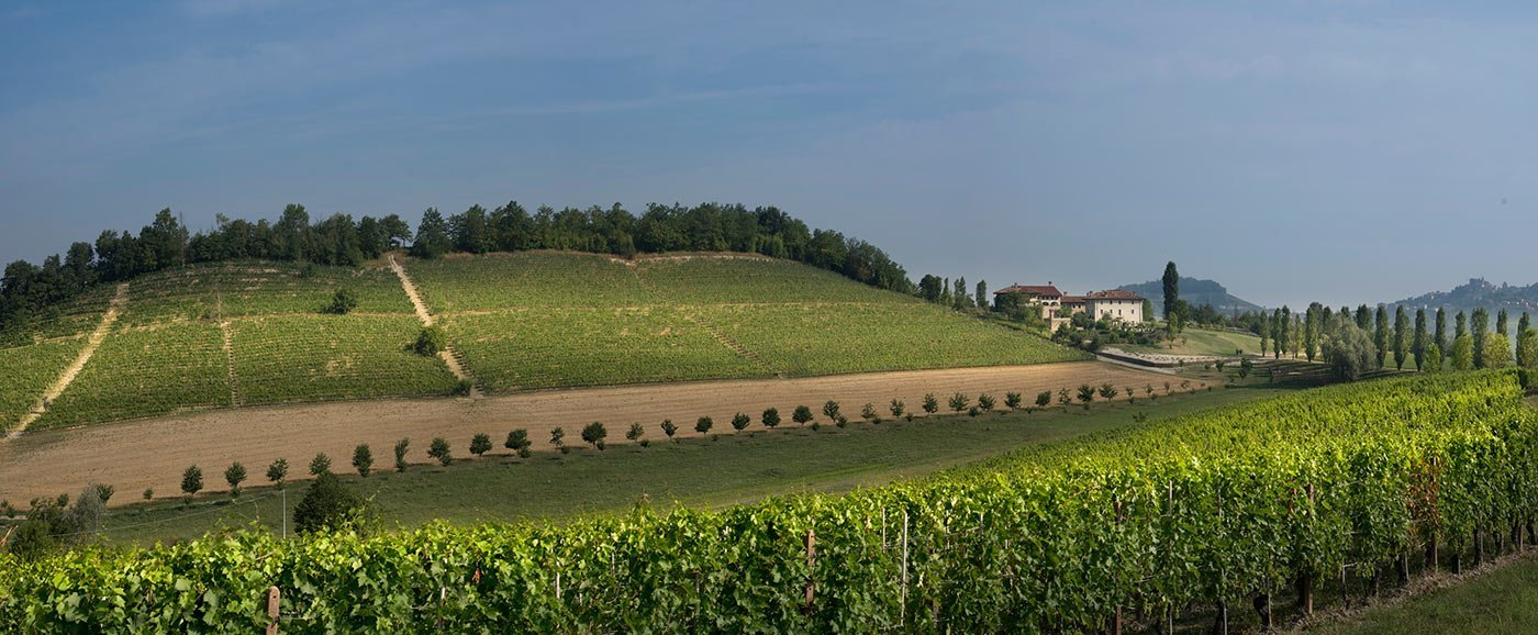 San Luigi Vineyards, Dogliani