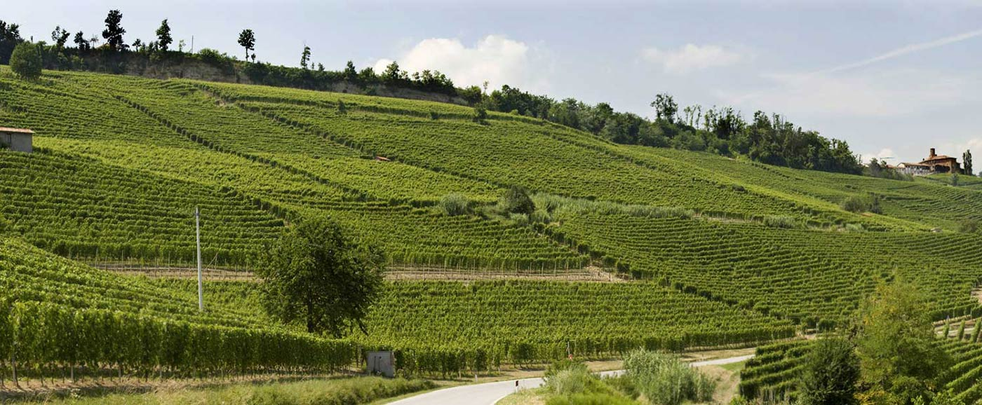 Terlo Vineyards, Barolo