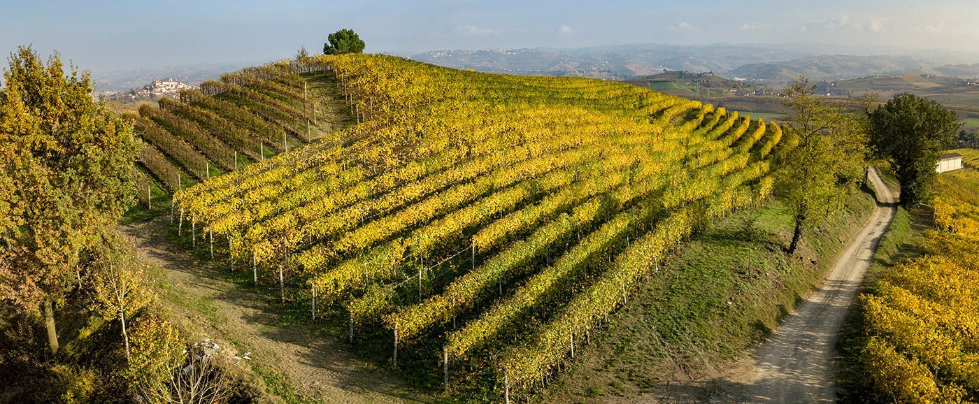 Monvigliero Vineyards, Verduno